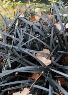 Black strands of grass with a few leaves