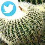 Picture related to Cactus and succulents overlaid with the