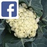 Picture related to Cauliflower overlaid with the
