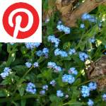 Picture related to Forget-me-not remembered overlaid with the