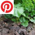 Picture related to Mulch overlaid with the