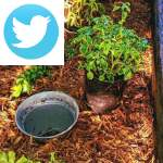 Picture related to Planting pots in pots overlaid with the