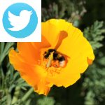 Picture related to Saving bees overlaid with the