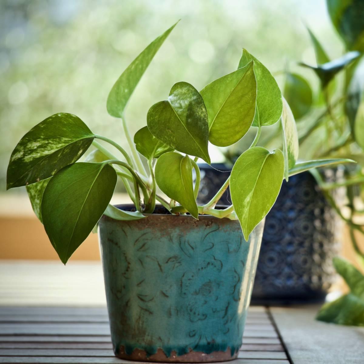 20 extraordinary bathroom plants – moisture loving survivor beauties