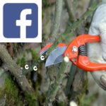 Picture related to Pruning climbing roses overlaid with the