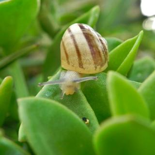 Decoy plants attract snails and slugs away from crops.