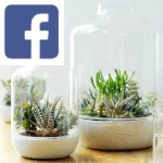 Picture related to Succulents overlaid with the