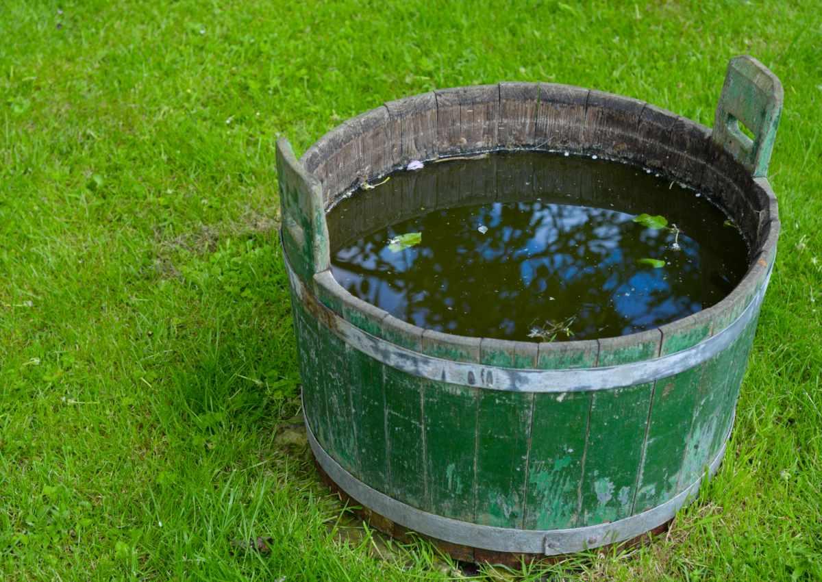 Wooden bucket used to prepare fermented weed tea in.
