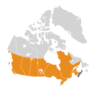 Map showing occurences of Russian Olive Elaeagnus angustifolia in Canada.