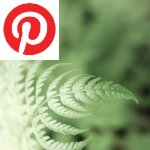 Picture related to Athyrium lady-fern overlaid with the