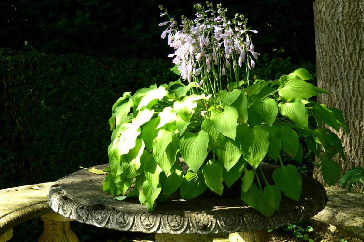 Plant in the shade with a single ray of light