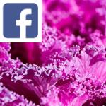 Picture related to Ornamental cabbage overlaid with the