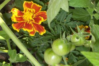 Garden companions work together