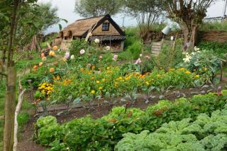 Crop rotation in a vegetable patch