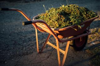 Lawn clippings to add to the compost
