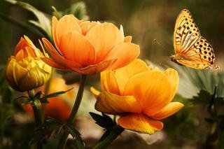 Orange garden flowers