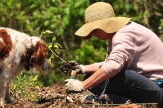 Permaculture gardens require fertilizer and compost