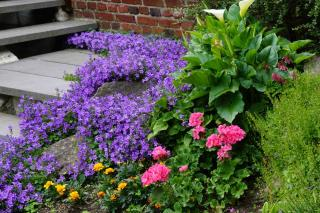 Best plants for a sloped garden