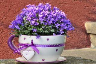 Purple-flowered plants for the garden