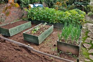Layout for a raised garden