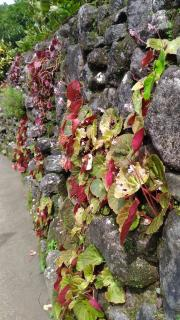 Stone wall with flowers in cavities
