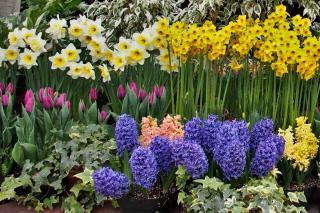 List of the 10 best spring bulbs