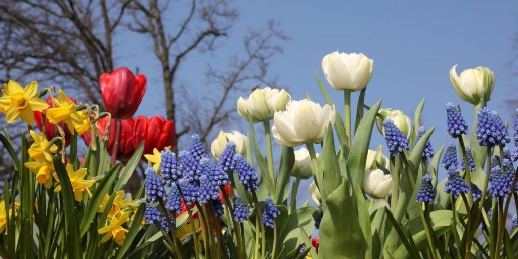 Garden flower bulbs in Spring