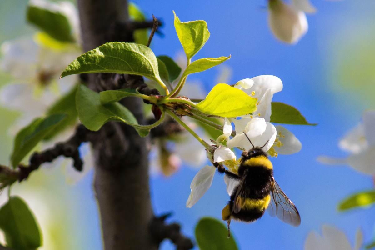 Melliferous plants, shrubs and trees that feed pollinators