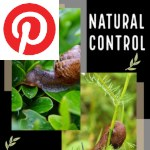 Picture related to Gasteropod control overlaid with the Pinterest logo.