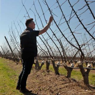 Assessing winter fruit trees for diseases