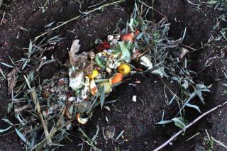 Best natural fertilizer, compost
