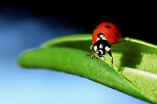 Known by all is the helpful ladybug