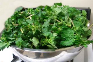 Nettle tea is an excellent versatile natural fertilizer