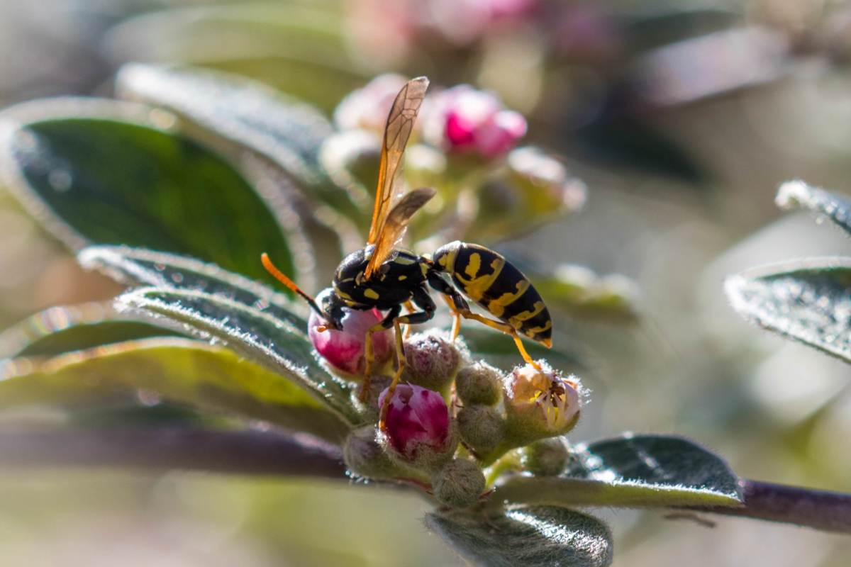 Insects that are beneficial for the garden