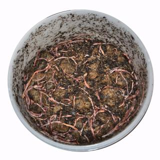 Vermicompost worms delivery