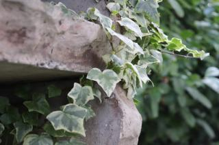 Shade flower ideas for summer garden boxes