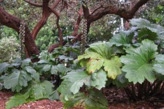 Acanthus is one of the flowers that resists drought