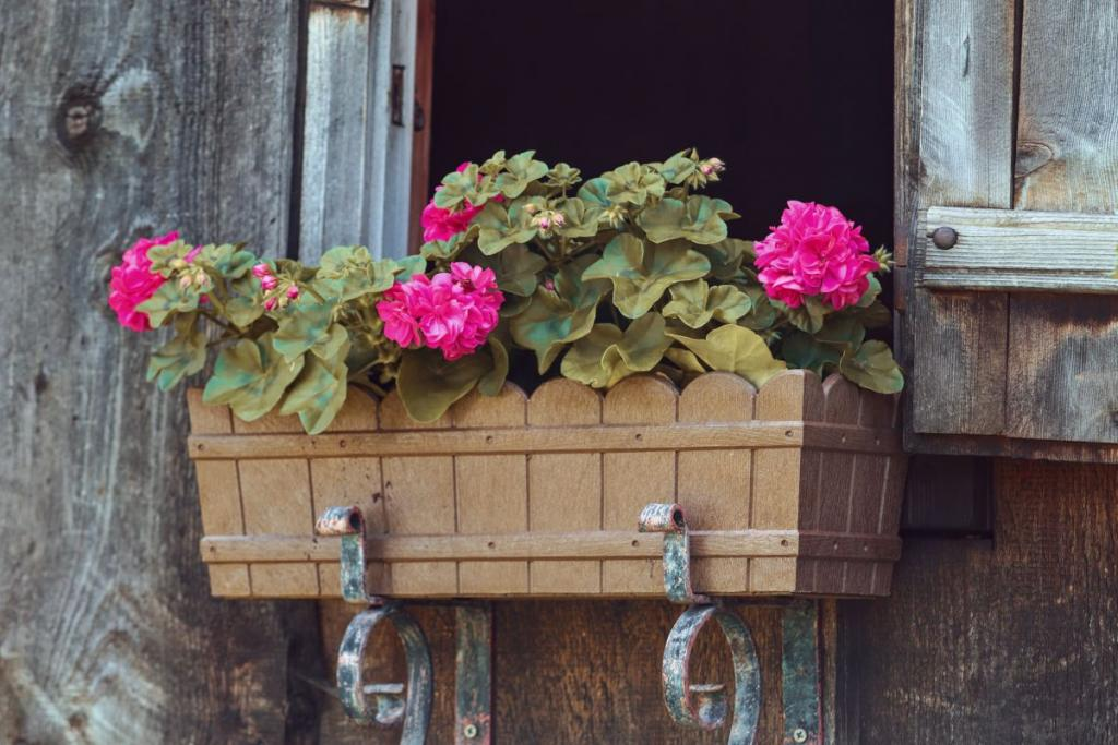 Best species of garden boxes for Spring