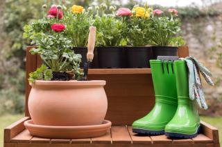 Summer garden box planting arrangement ideas