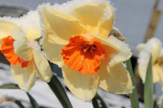 The legend of Narcissus comes from Greece