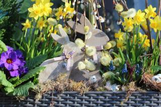 Best spring flowers for a garden box