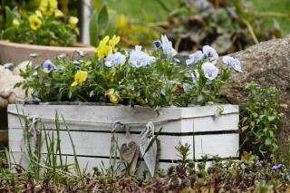 Full sun spring garden box