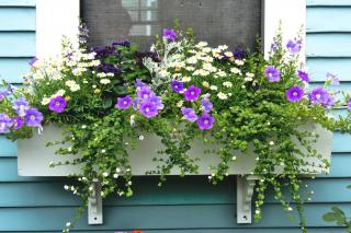Garden box for shade with spring flowers
