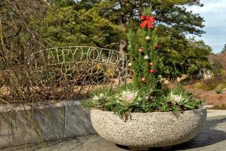 Conifer in a garden planter