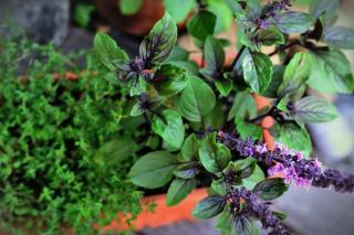 Taste is a favorite sense for a sensory garden