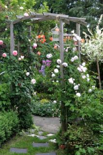 Arbors for climbing rose vines
