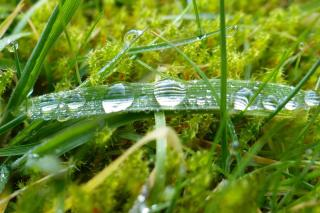Dethatching a lawn
