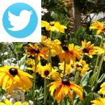 Picture related to Easy flower beds overlaid with the Twitter logo.