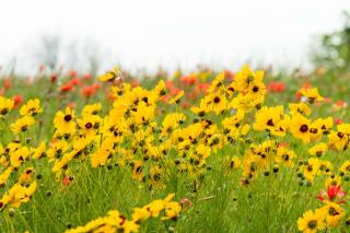 Flower beds that are easy to care for
