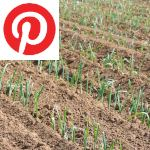 Picture related to Leek overlaid with the Pinterest logo.